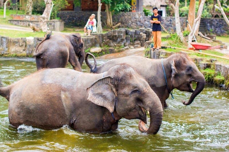 Babyolifanten die in water in Bali, Indonesië enjoing royalty-vrije stock fotografie