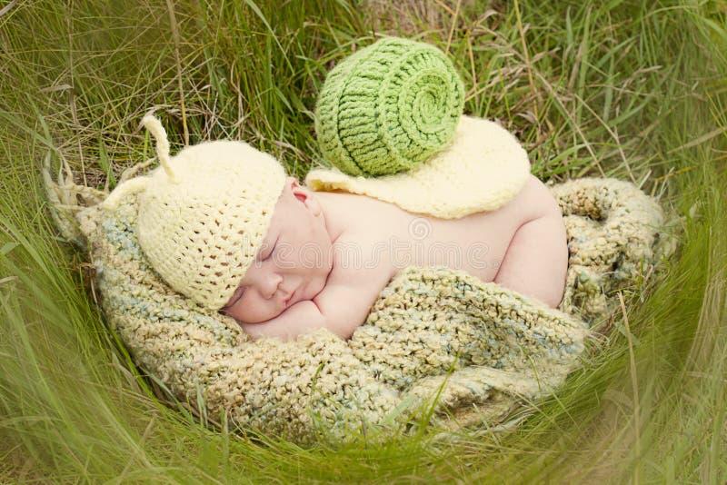 Babyschnecke stockfotos