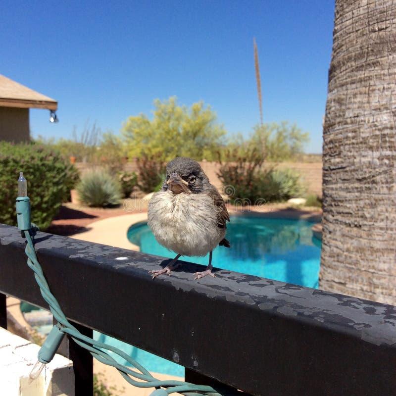 Babyvogel stock foto's