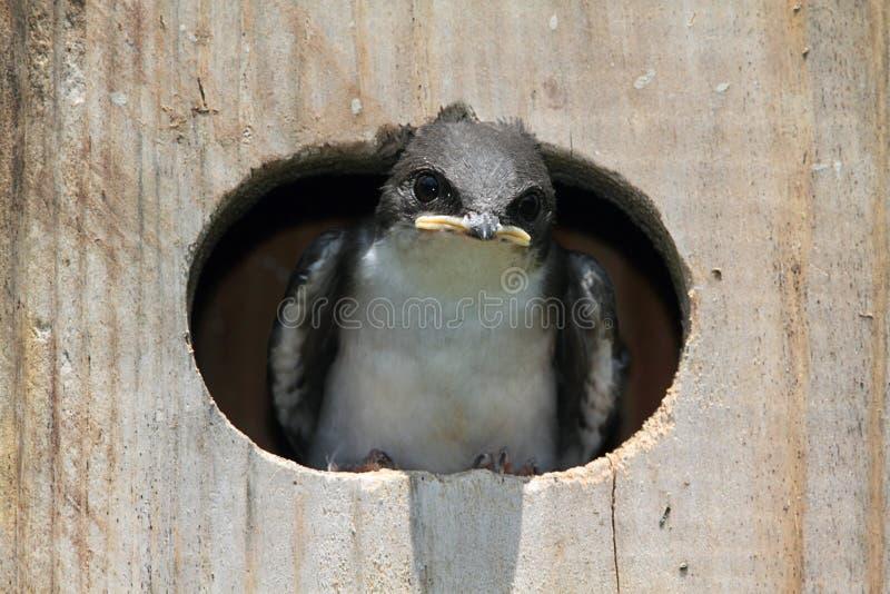 Babyvogel op een Vogelalgemene vergadering royalty-vrije stock foto's