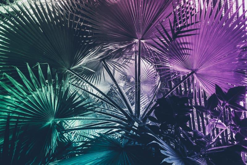 Bac конспекта неоновой тропической воодушевленности лист ладони сюрреалистический минимальный стоковые изображения rf