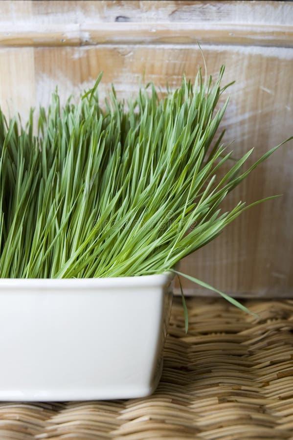 Bac de wheatgrass photo libre de droits
