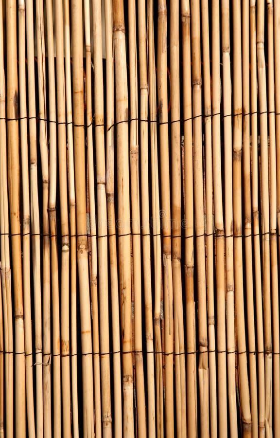 bac głęboka bambusa złota konsystencja fotografia royalty free