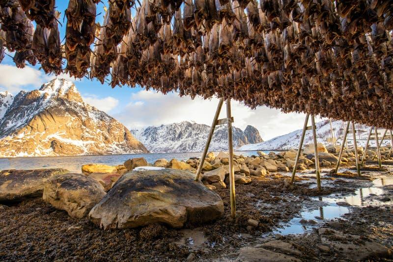 Bacalhau secado foto de stock