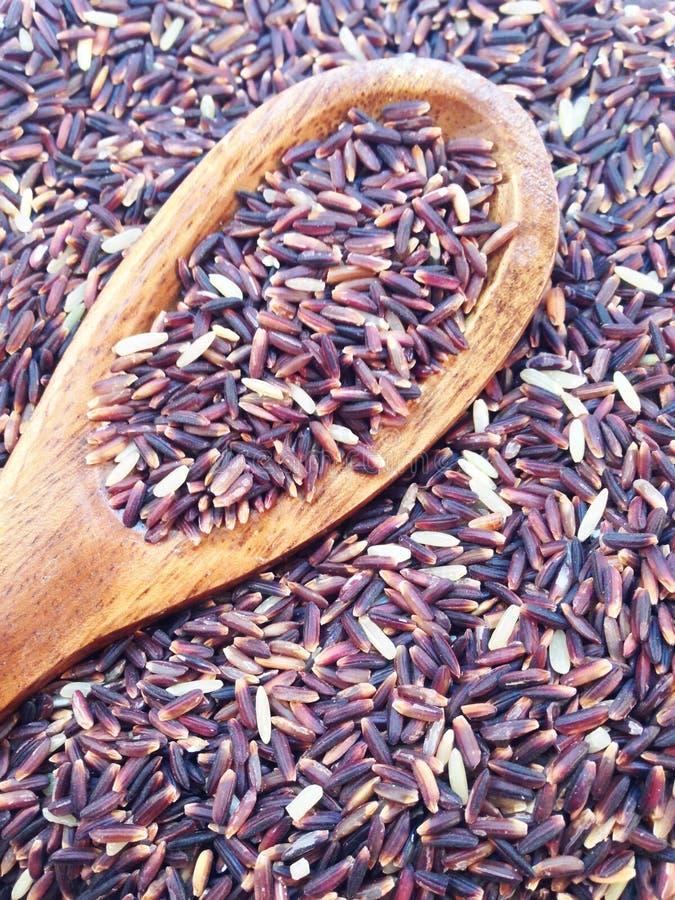 Bacca del riso con la siviera fotografia stock