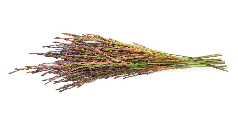 Bacca del riso su fondo bianco fotografie stock