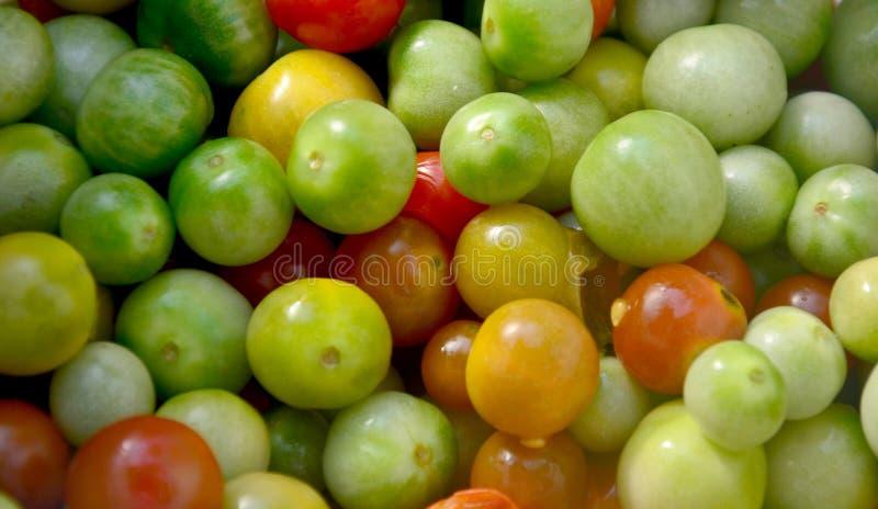 Bacca della Turchia o torvum del solano e piccolo toma piccolo e del melanzana immagini stock