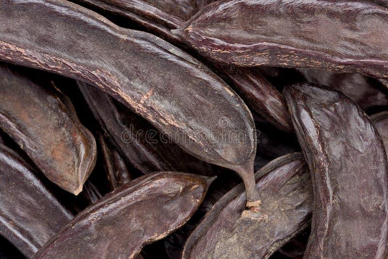 Baccelli della carruba (siliqua di Certonia) immagini stock libere da diritti