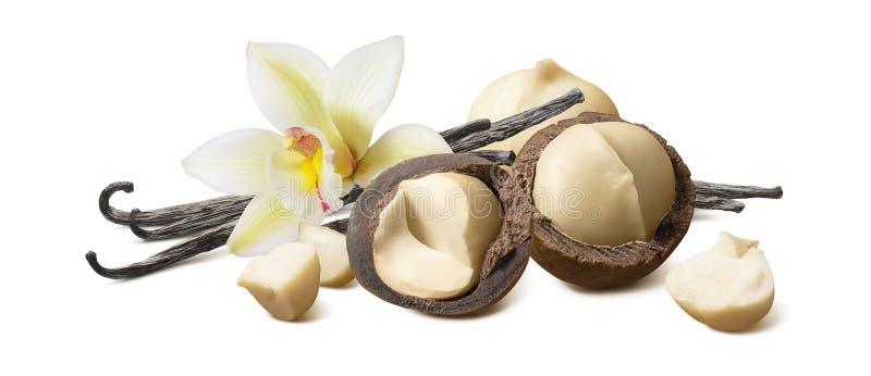 Baccelli di vaniglia e noci di macadamia isolati su fondo bianco fotografia stock
