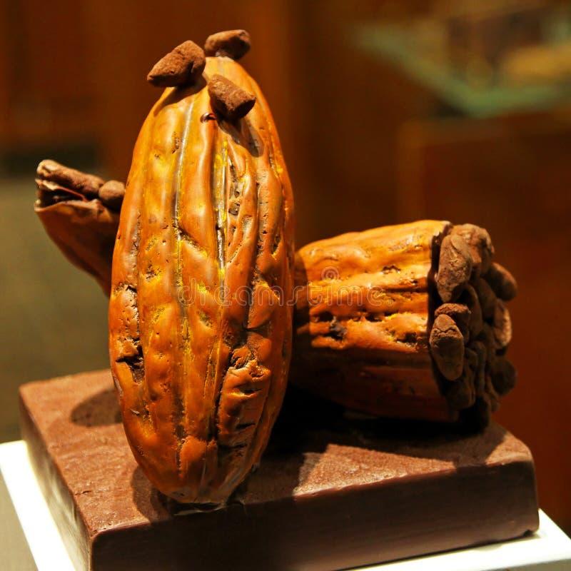Baccello del cacao grezzo fotografia stock libera da diritti