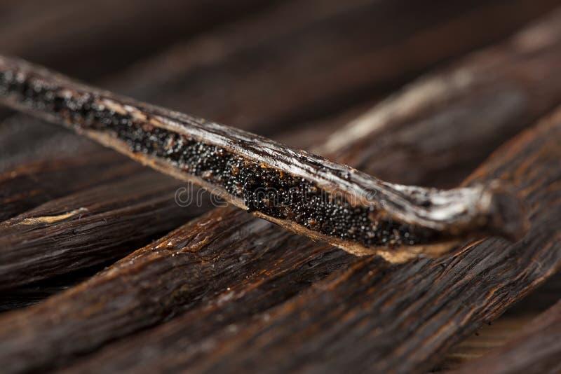 Baccello di vaniglia organico fresco di Brown fotografie stock libere da diritti
