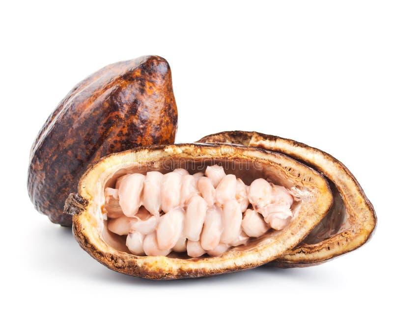 Baccello e fagioli crudi del cacao su un bianco fotografia stock