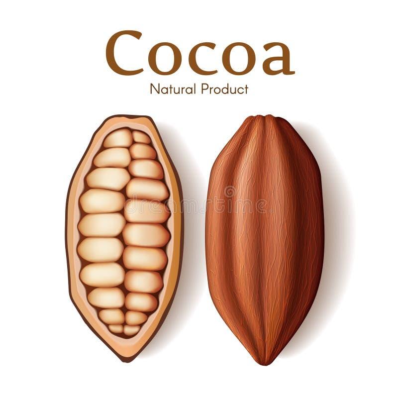 Baccello, seme o fagiolo realistico di cacao secco fresco isolato sull'illustrazione bianca di vettore del fondo Dessert del cioc illustrazione vettoriale