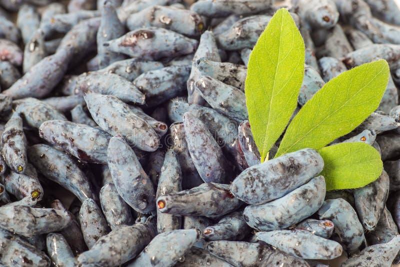 Bacche appetitose fresche di un caprifoglio - fondo fotografie stock