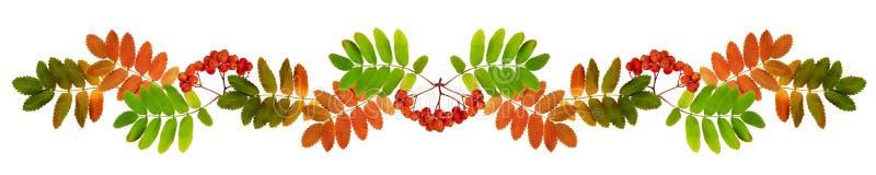 Bacche di sorbo e foglie di autunno in una ghirlanda fotografia stock libera da diritti