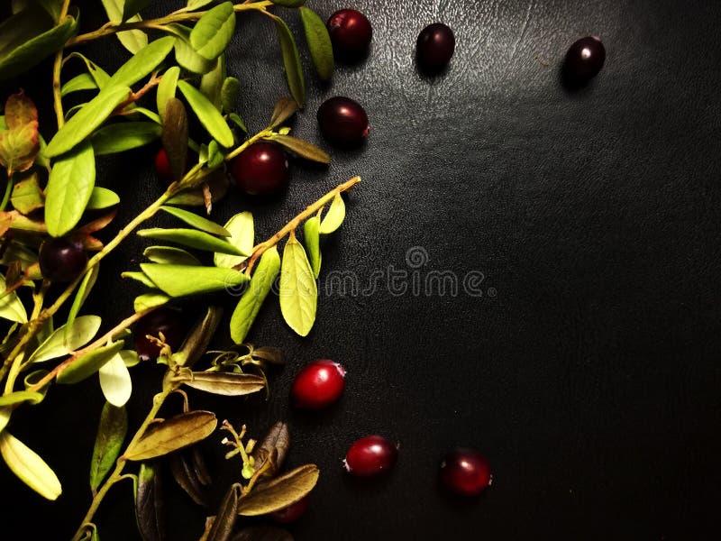 Bacche rosse del mirtillo fotografia stock