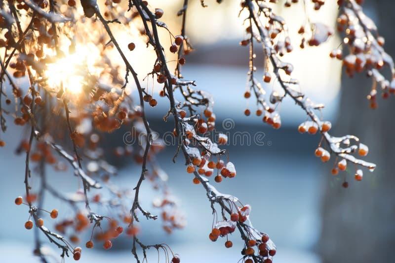 Bacche rosse nel ghiaccio e nel bokeh festivo scintillante fotografia stock libera da diritti
