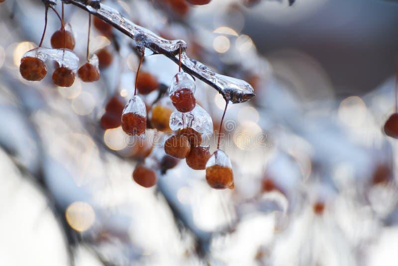 Bacche rosse nel ghiaccio e nel bokeh festivo scintillante immagine stock libera da diritti