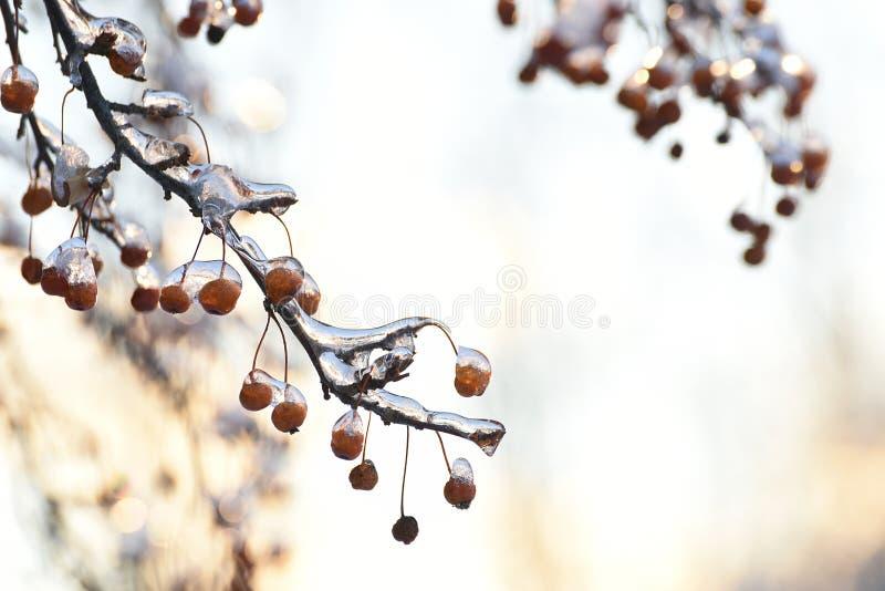 Bacche rosse nel ghiaccio e nel bokeh festivo scintillante fotografia stock