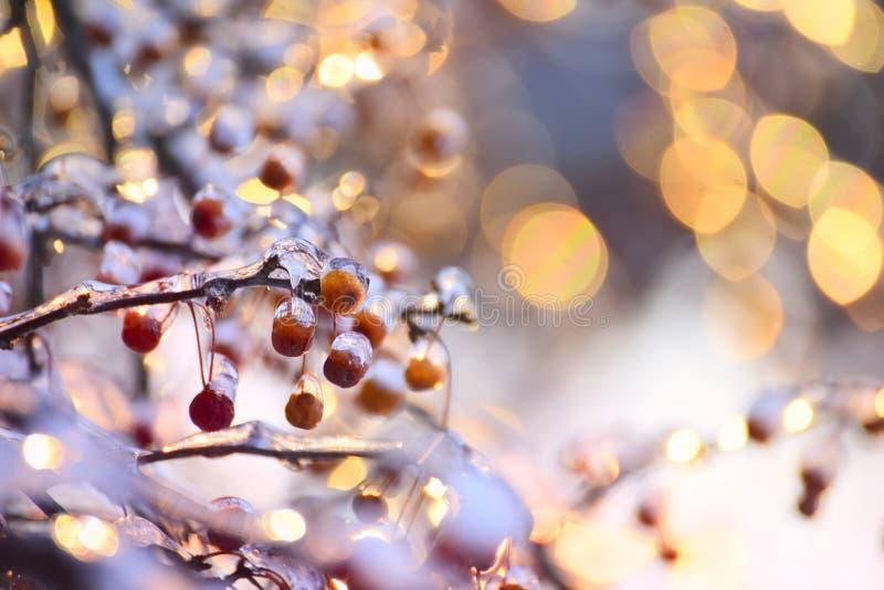 Bacche rosse nel ghiaccio e nel bokeh festivo scintillante L'umore delle vacanze invernali fotografia stock