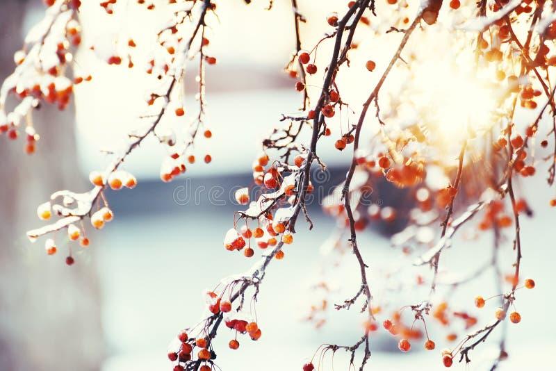 Bacche rosse nel ghiaccio e nel bokeh festivo scintillante L'umore delle vacanze invernali annata immagini stock