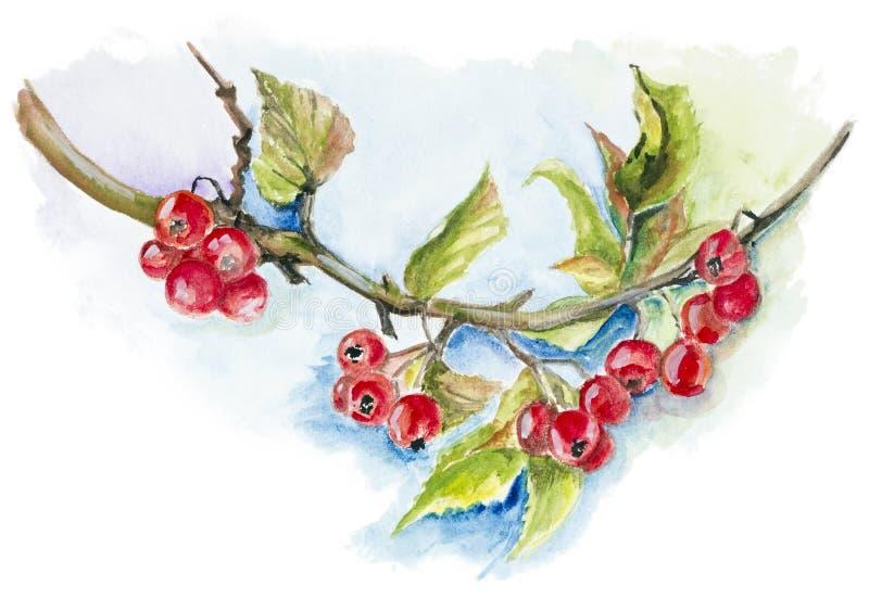 Bacche selvatiche rosse illustrazione vettoriale