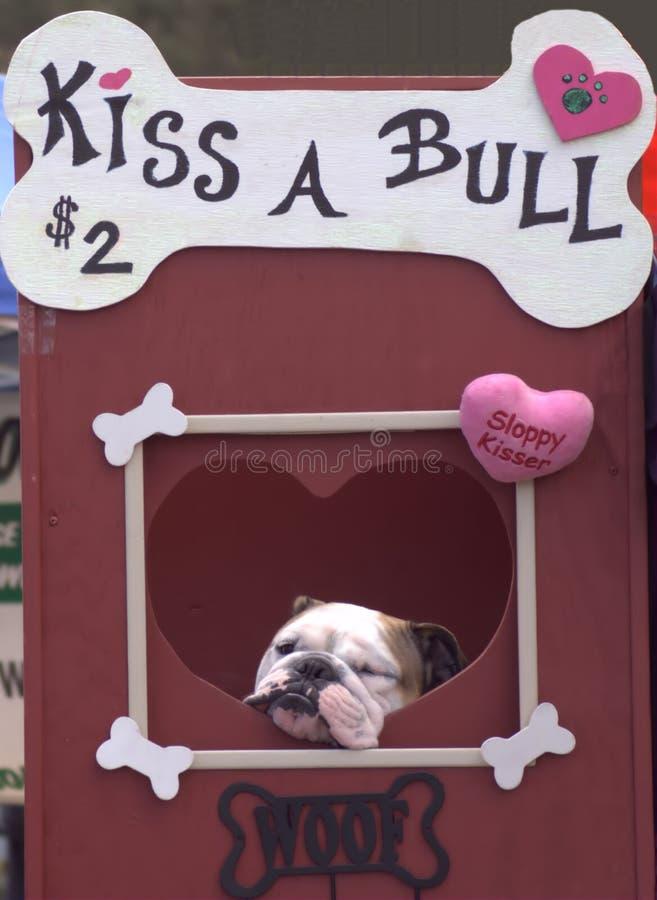 Baci un toro fotografia stock libera da diritti