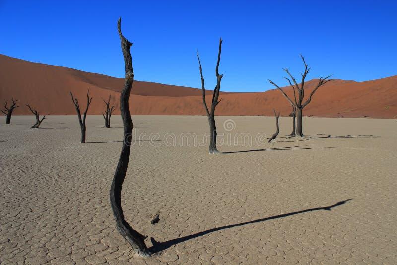 Bacia branca da argila no deserto de Namib em Namíbia fotografia de stock