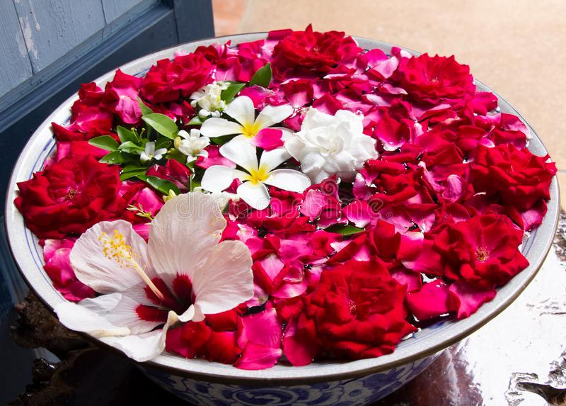 Bacia da água com flores de flutuação imagens de stock royalty free