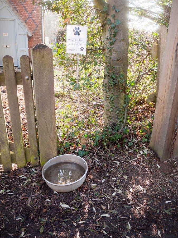 bacia da água do cão fora dos animais de estimação do campo do trajeto da porta imagem de stock royalty free