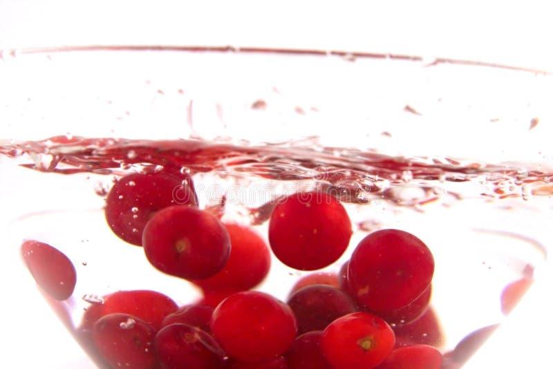 Bacia da cereja de Morello imagens de stock royalty free