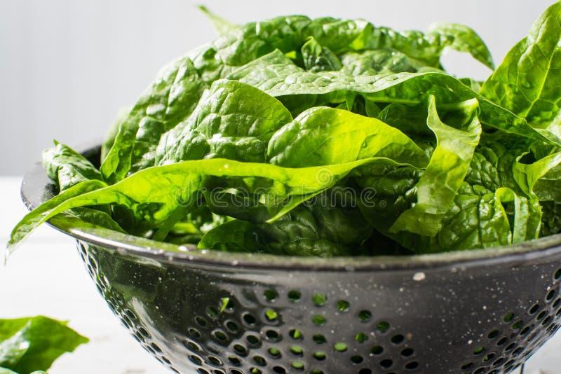Bacia lavada do verde do jardim espinafres frescos imagem de stock royalty free