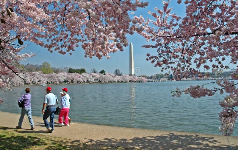 Bacia maré e monumento de Washington com flores de cereja imagens de stock royalty free