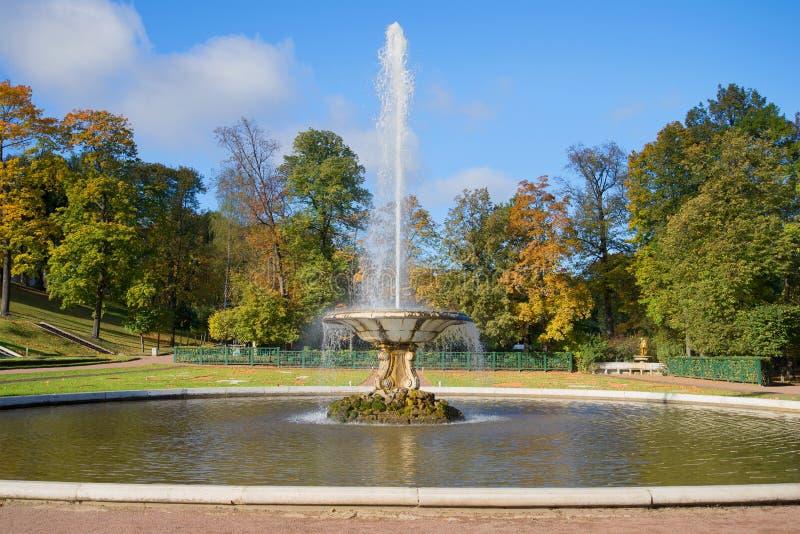 Bacia no parque mais baixo, outono dourado da fonte Peterhof, Rússia foto de stock