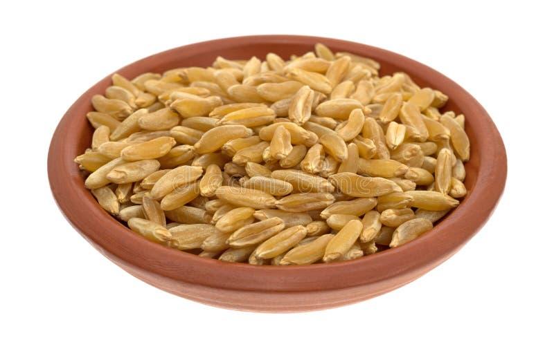 Bacia pequena enchida com o trigo de Khorasan fotos de stock royalty free