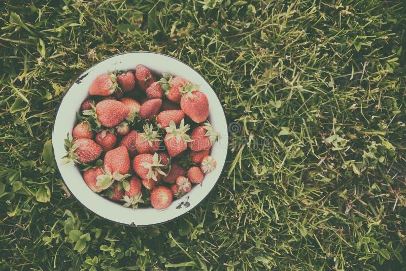 Bacia retro de morangos frescas no gramado, vista superior, tonificando com um efeito matte imagem de stock royalty free