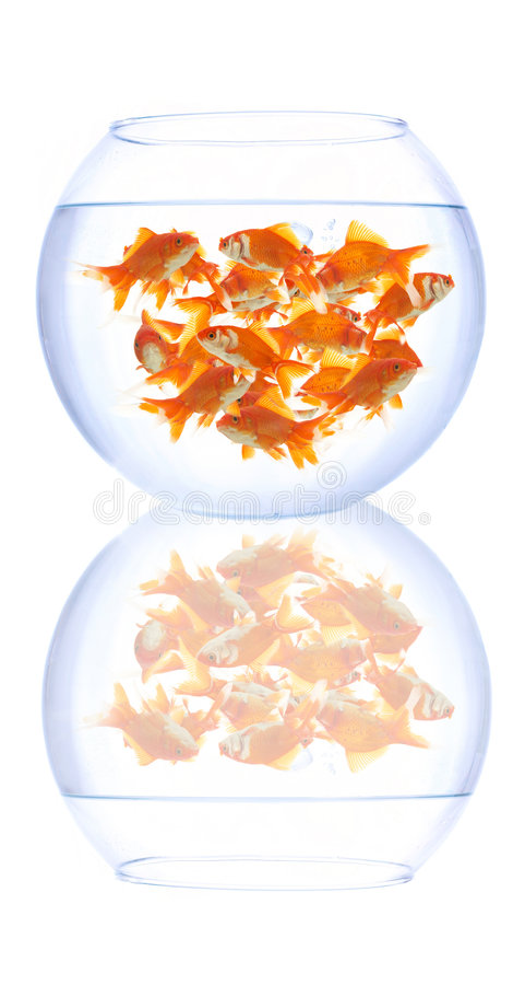 Bacia vazia dos peixes imagens de stock royalty free