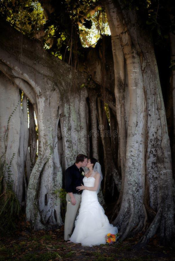 Baciare delle coppie di cerimonia nuziale immagini stock libere da diritti