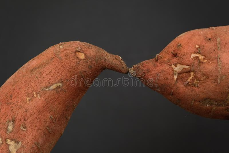 Baciare di due patate dolci immagini stock libere da diritti
