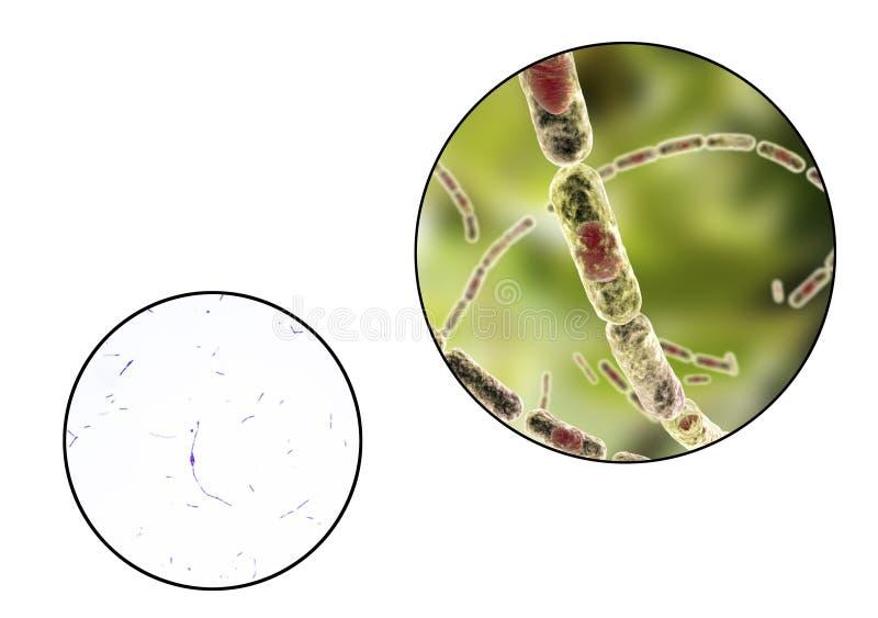 Bacil anthracis, lichte micrograaf en illustratie royalty-vrije illustratie