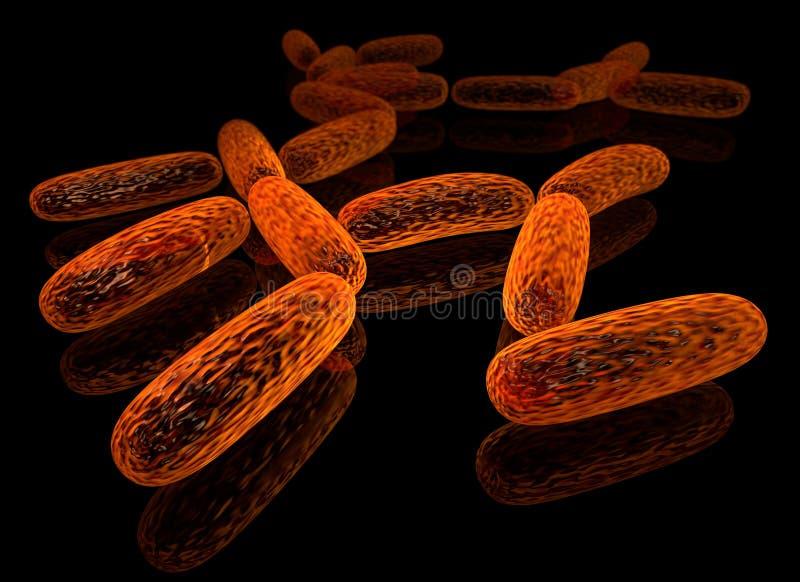 Bacillus vektor illustrationer