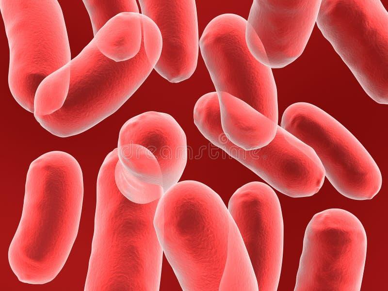 Bacilo bactérias ilustração royalty free