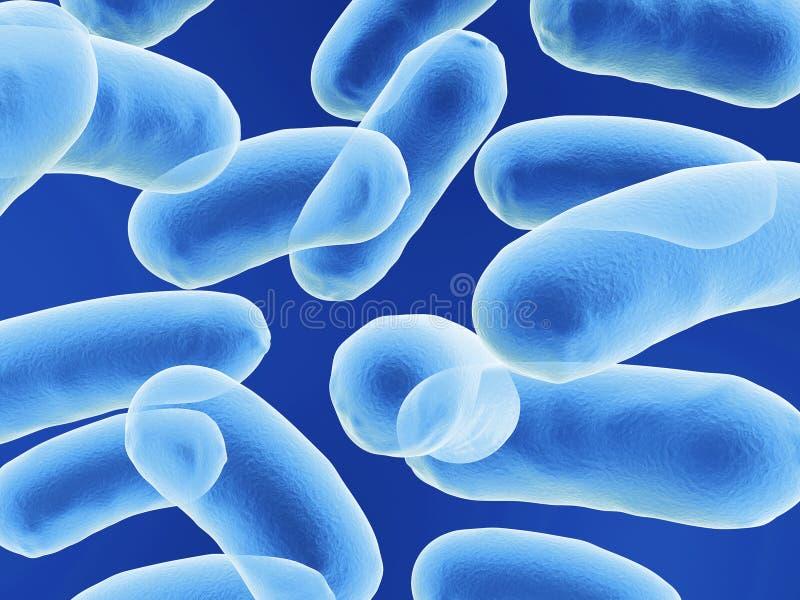 Bacilo bactérias ilustração stock