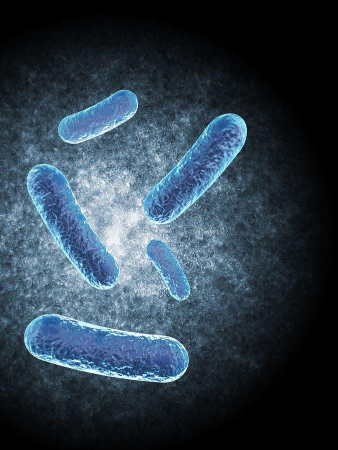 Bacilo bacterias ilustración del vector