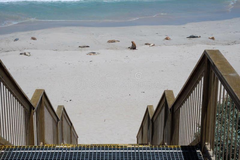 Bacino al mare in Australia immagine stock libera da diritti