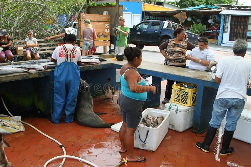 Bacino dei pescatori in Puerto Ayora, Santa Cruz fotografia stock libera da diritti