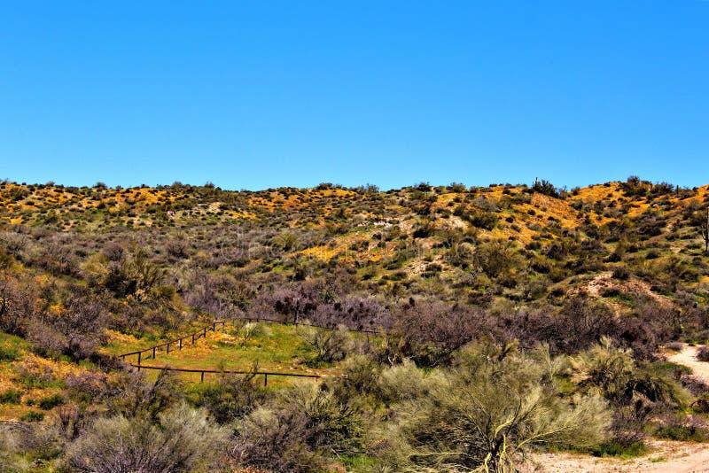 Bacino idrico di Bartlett Lake, la contea di Maricopa, stato vista scenica di Arizona, paesaggio degli Stati Uniti fotografie stock libere da diritti