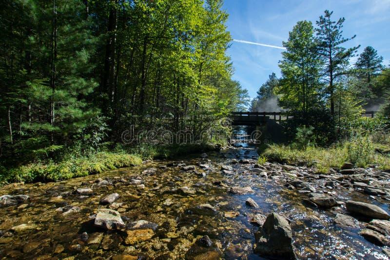 Bacino idrico lungo di trascuratezza del pino nella foresta dello stato di Michaux, Pennsyl immagini stock libere da diritti