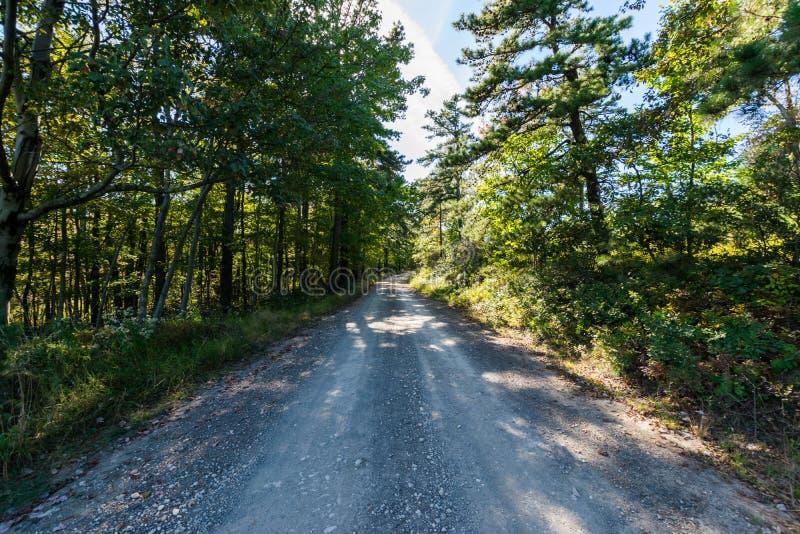 Bacino idrico lungo di trascuratezza del pino nella foresta dello stato di Michaux, Pennsyl fotografie stock