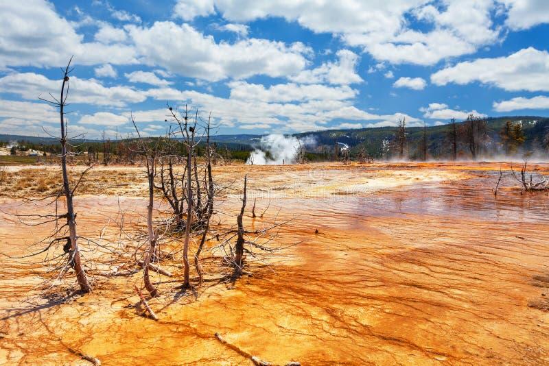 Bacino Yellowstone, Wyoming, U.S.A. del biscotto fotografia stock
